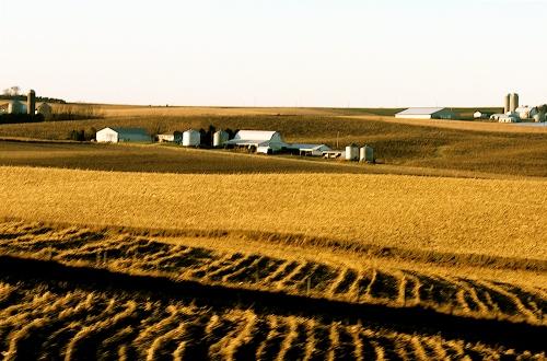 Autumn Iowa Fields